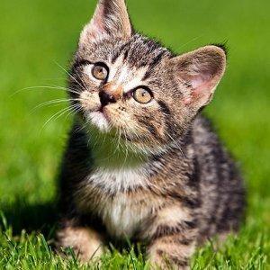 kitten-cuteness300.jpg.f4ec60bcd461d84a0317b1b8966815d2.jpg