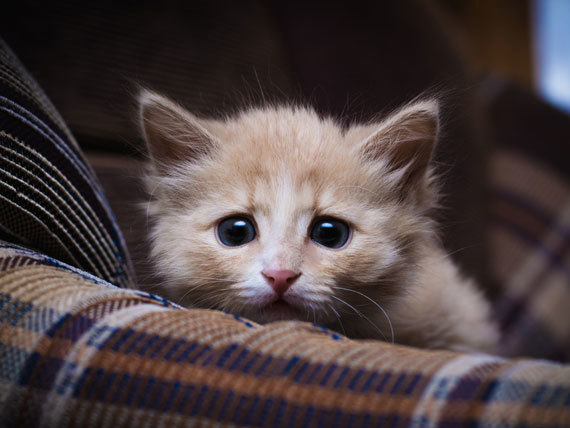 scared-kitten-shutterstock_191443322.jpg.173b0acbf5a5cc79def92c479b0b98a2.jpg