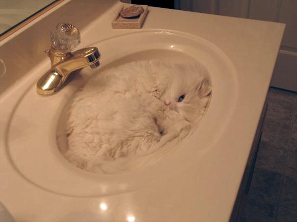 liquidcat1.jpg