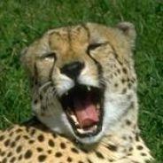 GepardenK