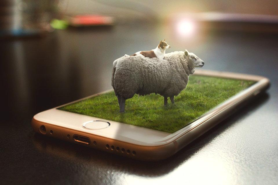 sheep.jpg.000e77464a1269ca5ced518d77794a69.jpg