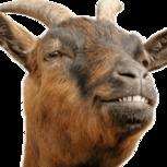 Carny Goat