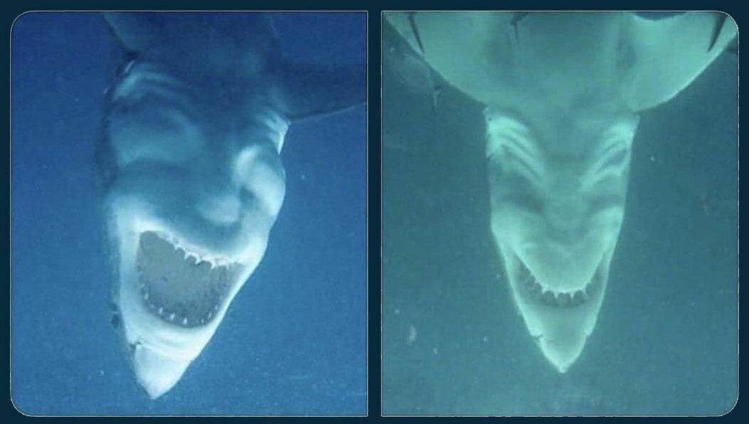 Sharks_for_Doomworld2.jpg.f23138c505677fbd58ba585bee40880c.jpg