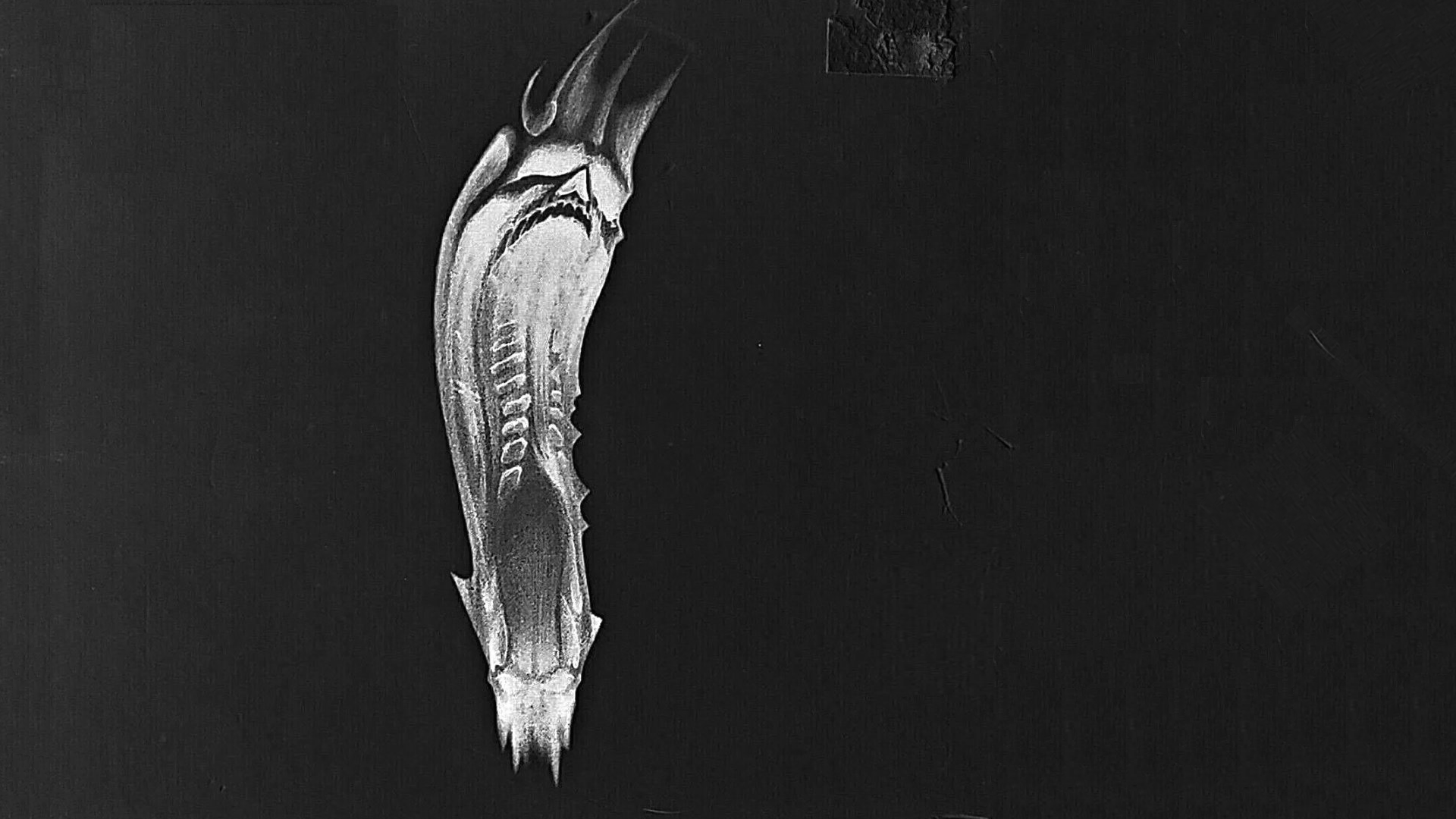 Master levels wallpaper black and white inverted.png