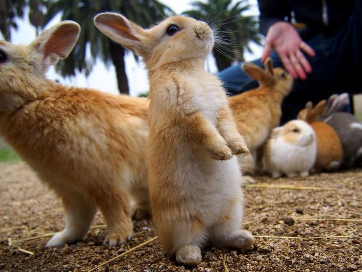 Bunny standing on its hind legs; other bunnies in the background