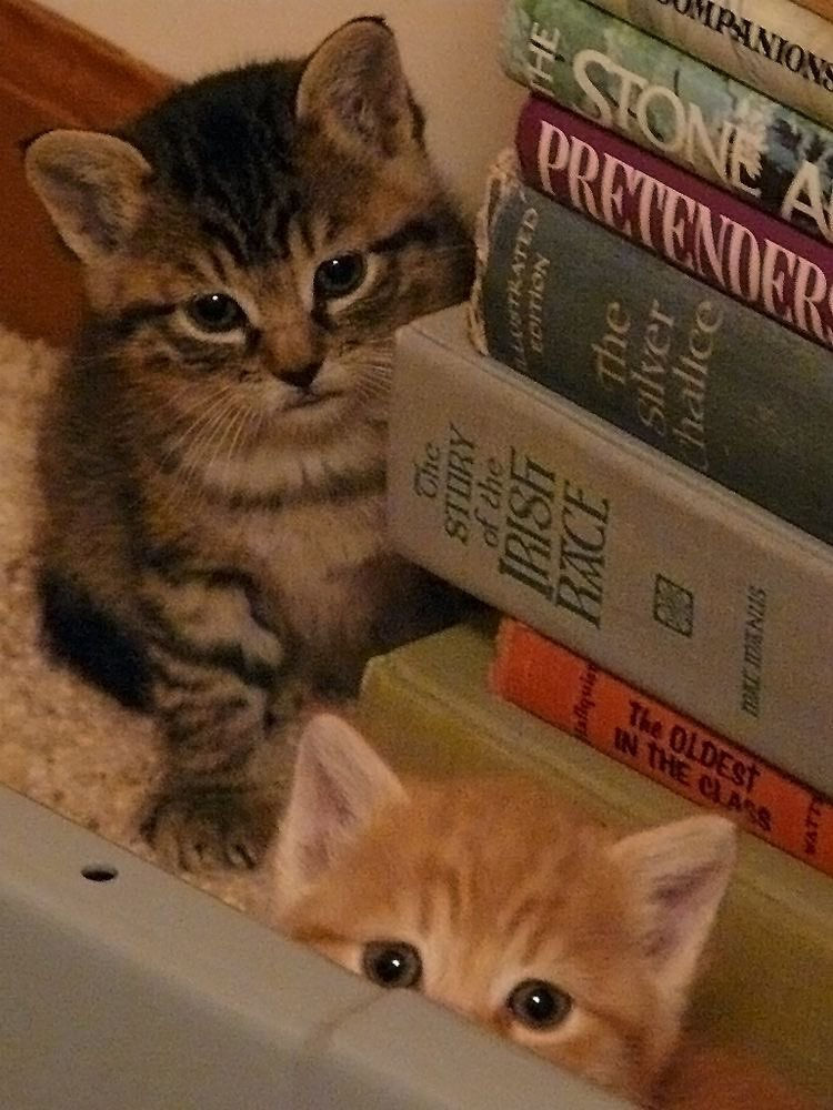 Two kittens next to a stack of old books